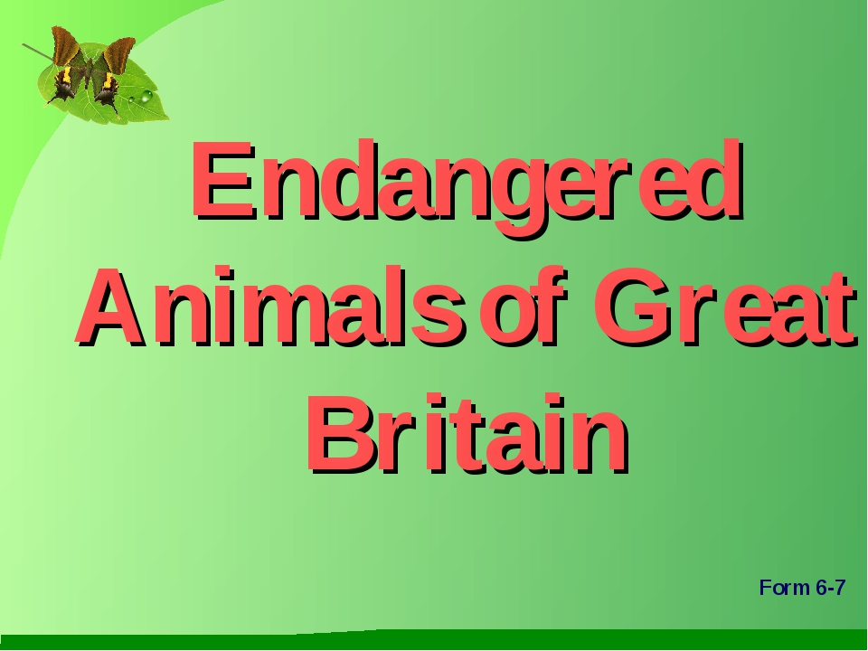 Endangered Animals of Great Britain Form 6-7