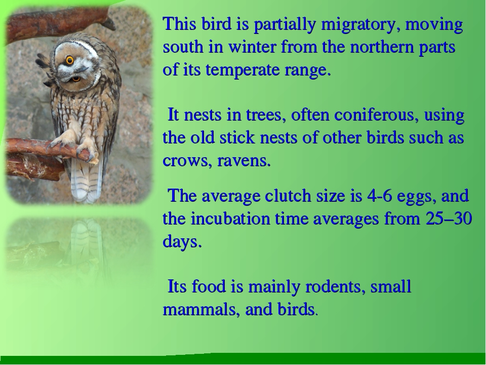 This bird is partially migratory, moving south in winter from the northern pa...