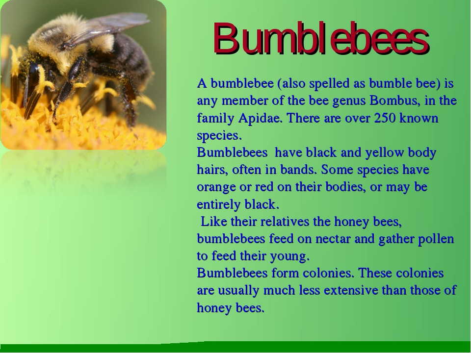 Bumblebees A bumblebee (also spelled as bumble bee) is any member of the bee...