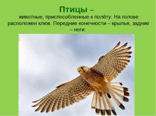 животные, приспособленные к полёту. На голове расположен клюв. Передние коне