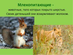 Млекопитающие - животные, тело которых покрыто шерстью. Своих детенышей они в