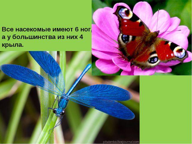 Все насекомые имеют 6 ног, а у большинства из них 4 крыла.