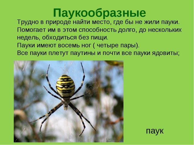 Паукообразные паук Трудно в природе найти место, где бы не жили пауки. Помога...