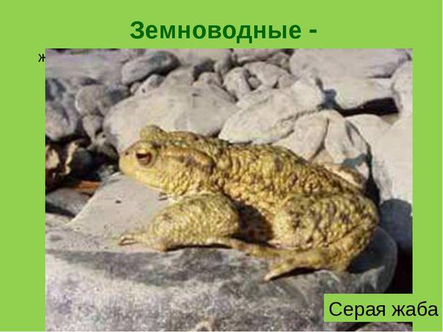 Земноводные - животные, которые могут жить и на суше, и в воде. Некоторые зем...