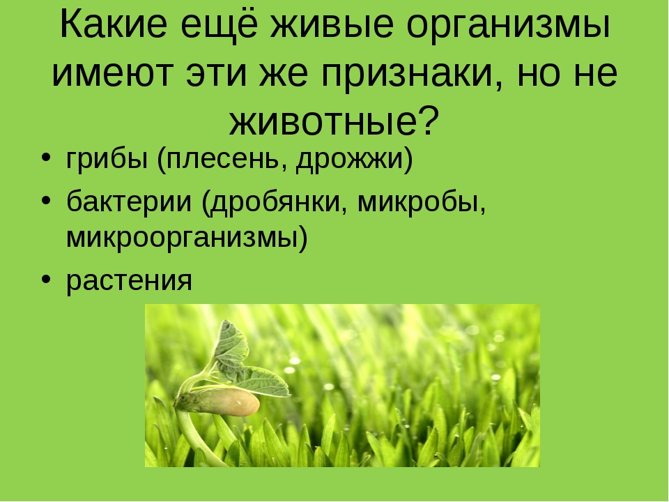 Какие ещё живые организмы имеют эти же признаки, но не животные? грибы (плесе...