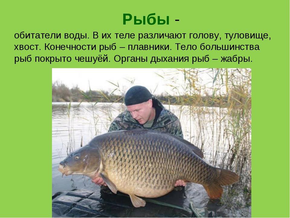 Рыбы - обитатели воды. В их теле различают голову, туловище, хвост. Конечност...
