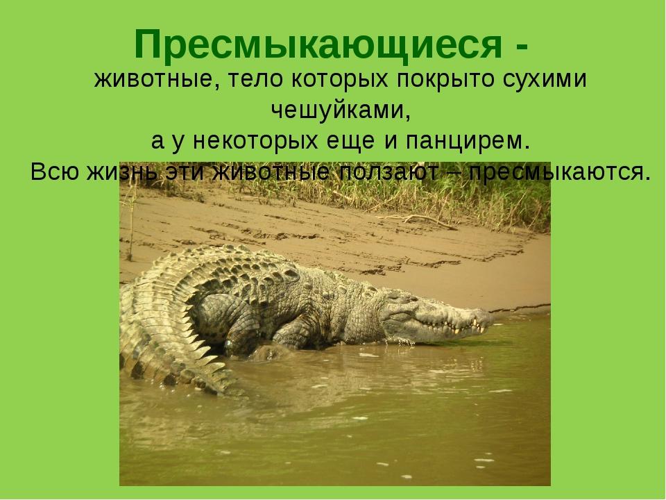Пресмыкающиеся - животные, тело которых покрыто сухими чешуйками, а у некотор...