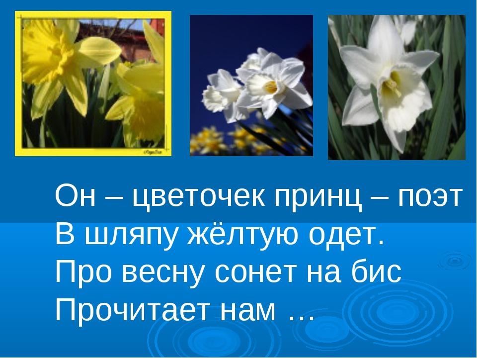 Он – цветочек принц – поэт В шляпу жёлтую одет. Про весну сонет на бис Прочит...