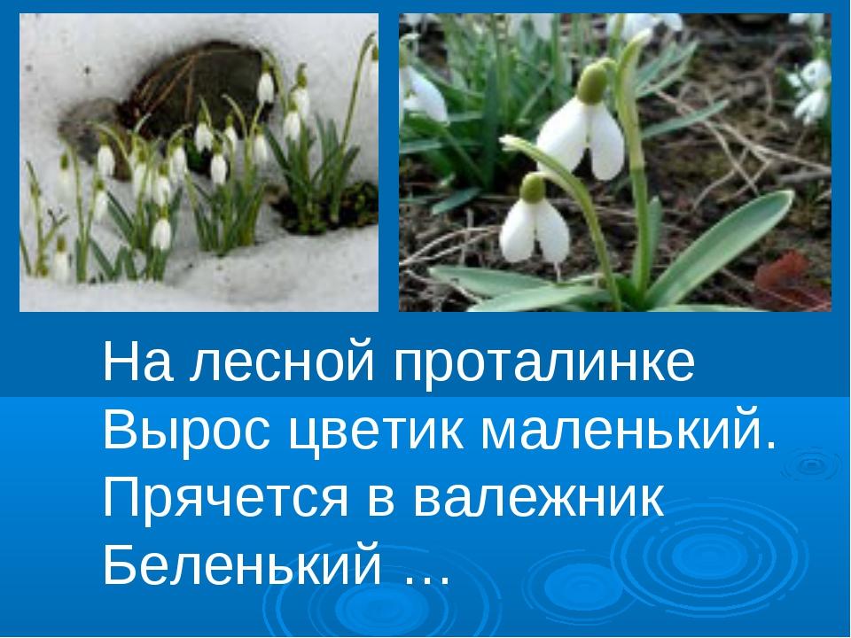 На лесной проталинке Вырос цветик маленький. Прячется в валежник Беленький …