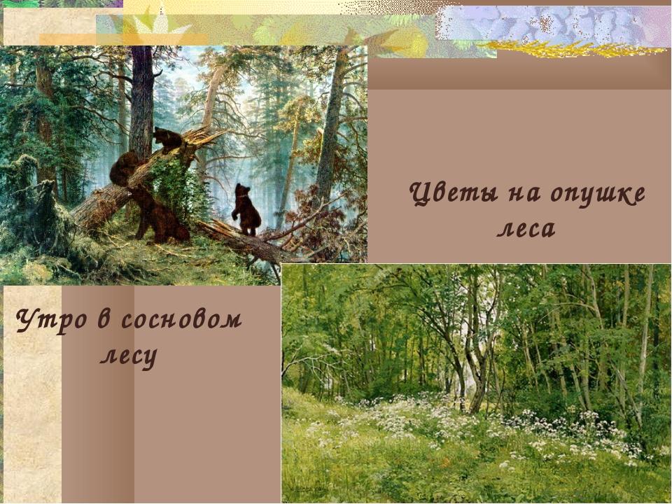 Утро в сосновом лесу Цветы на опушке леса