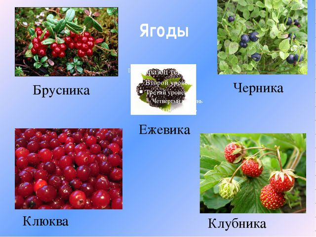Ягоды Брусника Черника Ежевика Клюква Клубника