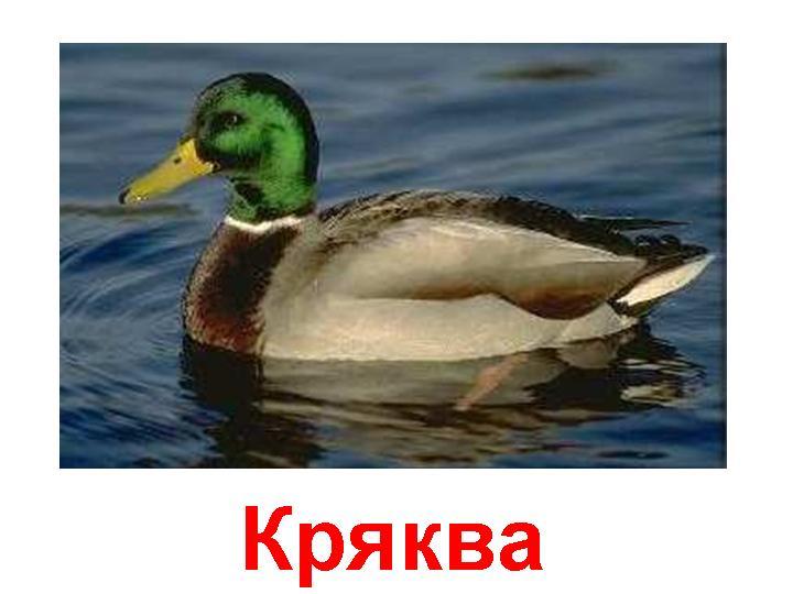 0003-003-Krjakva