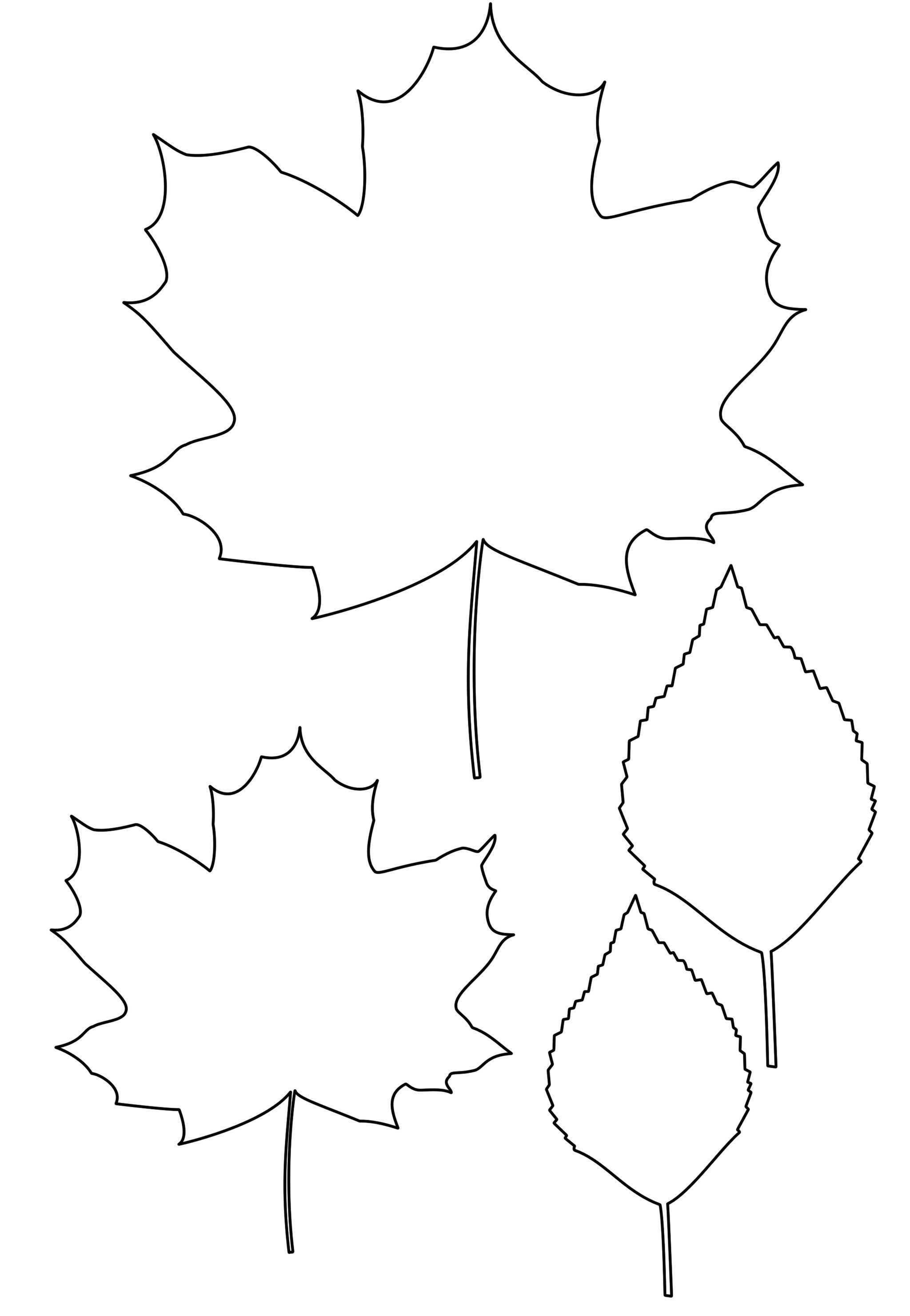 Шаблон для открытки кленовый лист, анимация картинки мерцающие