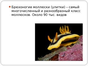 Брюхоногие моллюски (улитки) – самый многочисленный и разнообразный класс мол