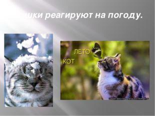 Кошки реагируют на погоду.