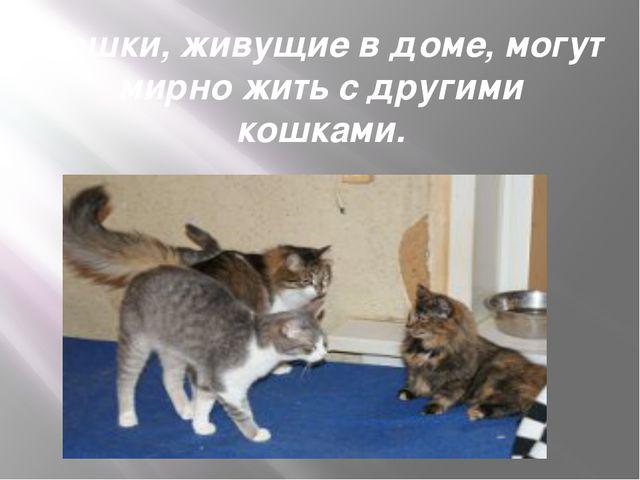 Кошки, живущие в доме, могут мирно жить с другими кошками.