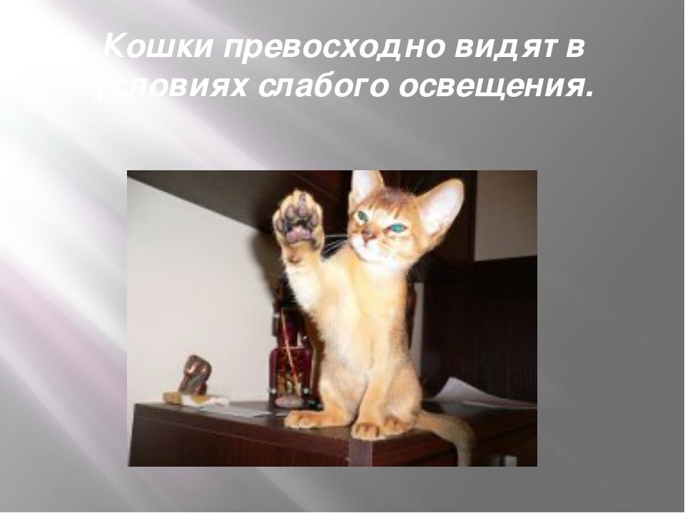 Кошки превосходно видят в условиях слабого освещения.