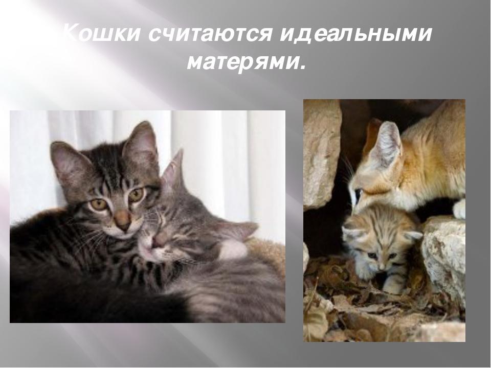 Кошки считаются идеальными матерями.