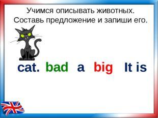 Учимся описывать животных. Составь предложение и запиши его. cat. big bad It