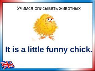 Учимся описывать животных It is a little funny chick.