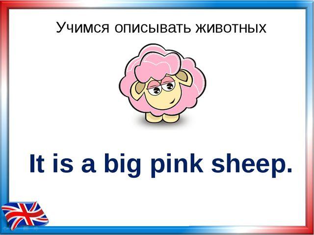 Учимся описывать животных It is a big pink sheep.