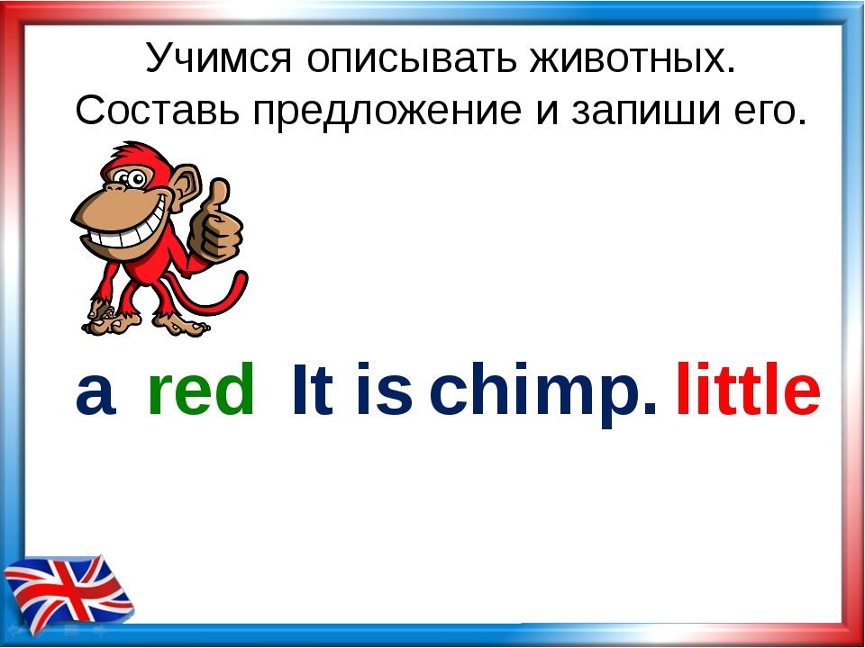 Учимся описывать животных. Составь предложение и запиши его. chimp. little re...