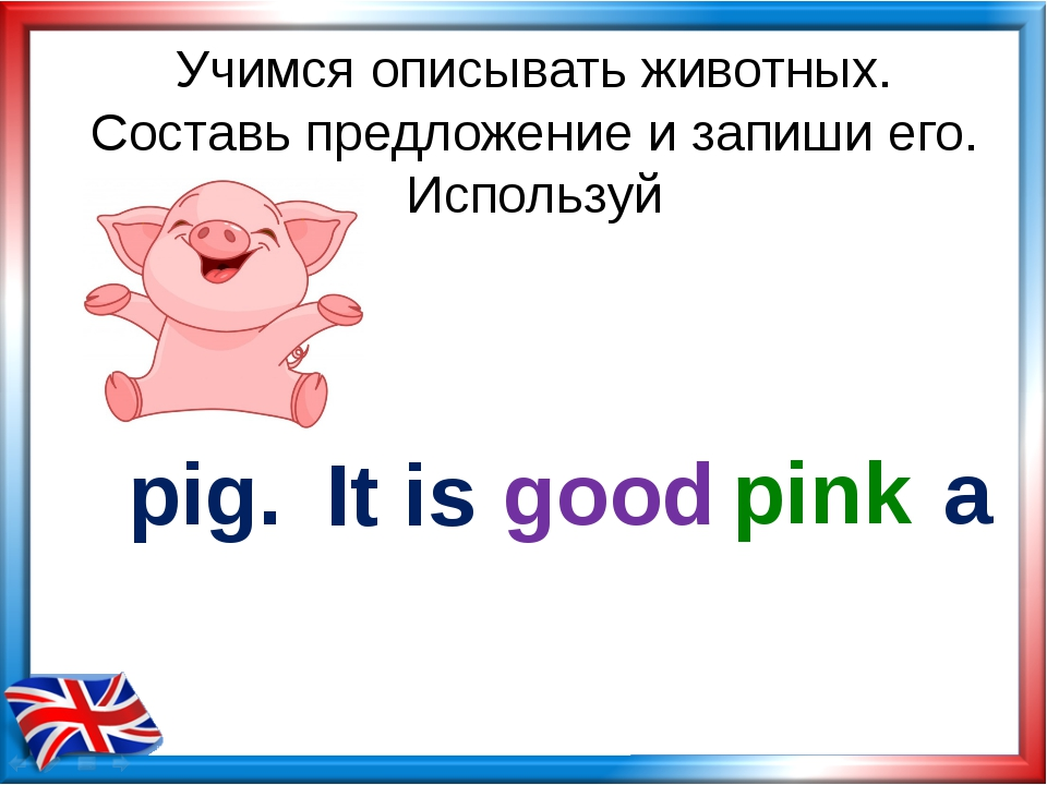 Учимся описывать животных. Составь предложение и запиши его. Используй pig. g...