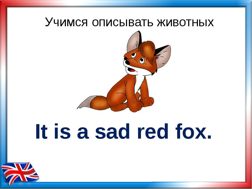 Учимся описывать животных It is a sad red fox.