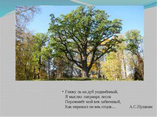 Гляжу ль на дуб уединённый, Я мыслю: патриарх лесов Переживёт мой век забвенн