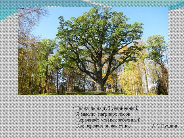 Гляжу ль на дуб уединённый, Я мыслю: патриарх лесов Переживёт мой век забвенн...