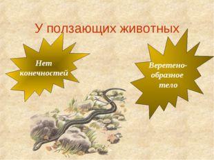 У ползающих животных Веретено- образное тело Нет конечностей
