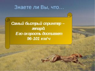Знаете ли Вы, что… Самый быстрый спринтер – гепард. Его скорость достигает 96