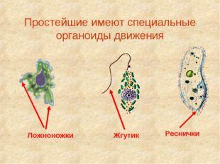 Простейшие имеют специальные органоиды движения Ложноножки Жгутик Реснички