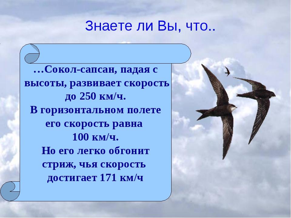 Знаете ли Вы, что.. …Сокол-сапсан, падая с высоты, развивает скорость до 250...