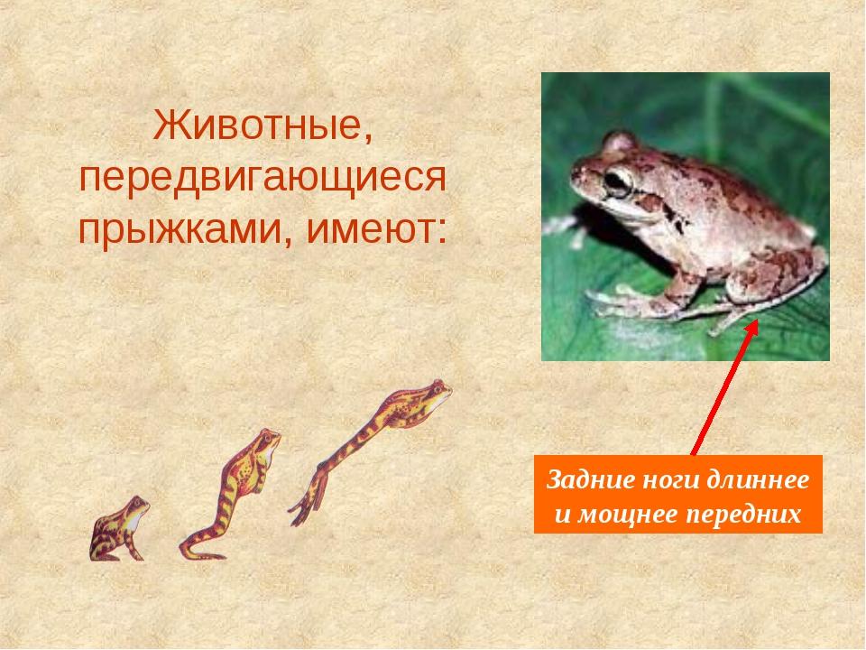 Животные, передвигающиеся прыжками, имеют: Задние ноги длиннее и мощнее перед...