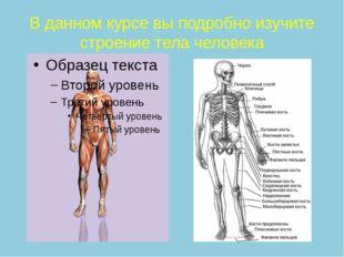 В данном курсе вы подробно изучите строение тела человека