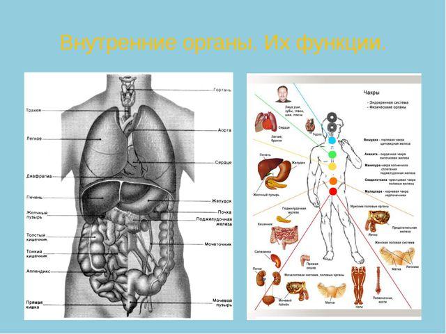 Внутренние органы. Их функции.