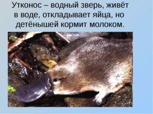Утконос – водный зверь, живёт в воде, откладывает яйца, но детёнышей кормит м