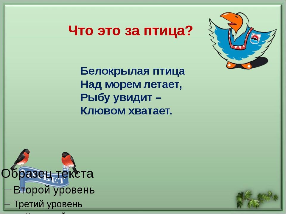 Какую камчатскую птицу называют «морским попугаем»? Что это за птица? АУКЦИОН