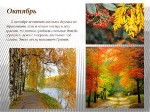Октябрь В октябре желтеют листья и деревья их сбрасывают, если в начале месяц