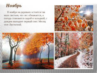 Ноябрь В ноябре на деревьях остается так мало листьев, что лес обнажается, а