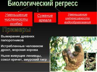 Уменьшение численности особей Сужение ареала Уменьшение интенсивности видообр