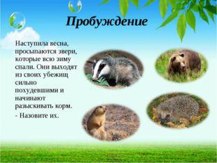 Пробуждение Наступила весна, просыпаются звери, которые всю зиму спали. Они в