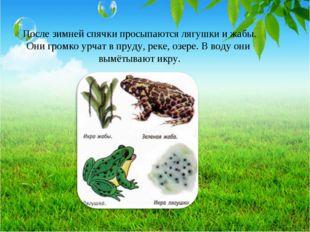 После зимней спячки просыпаются лягушки и жабы. Они громко урчат в пруду, рек