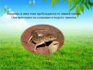 Ящерицы и змеи тоже пробуждаются от зимней спячки. Они выползают на солнышко