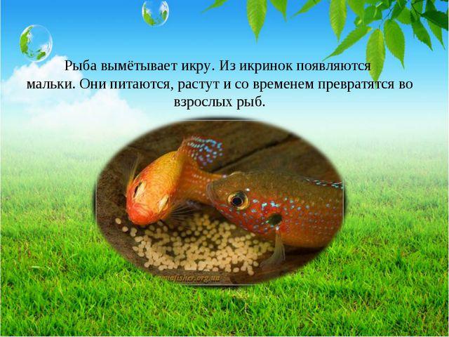 Рыба вымётывает икру. Из икринок появляются мальки. Они питаются, растут и со...