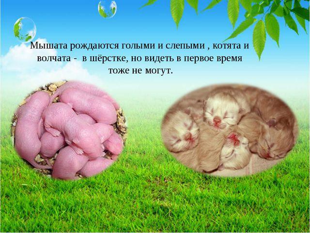 Мышата рождаются голыми и слепыми , котята и волчата - в шёрстке, но видеть в...