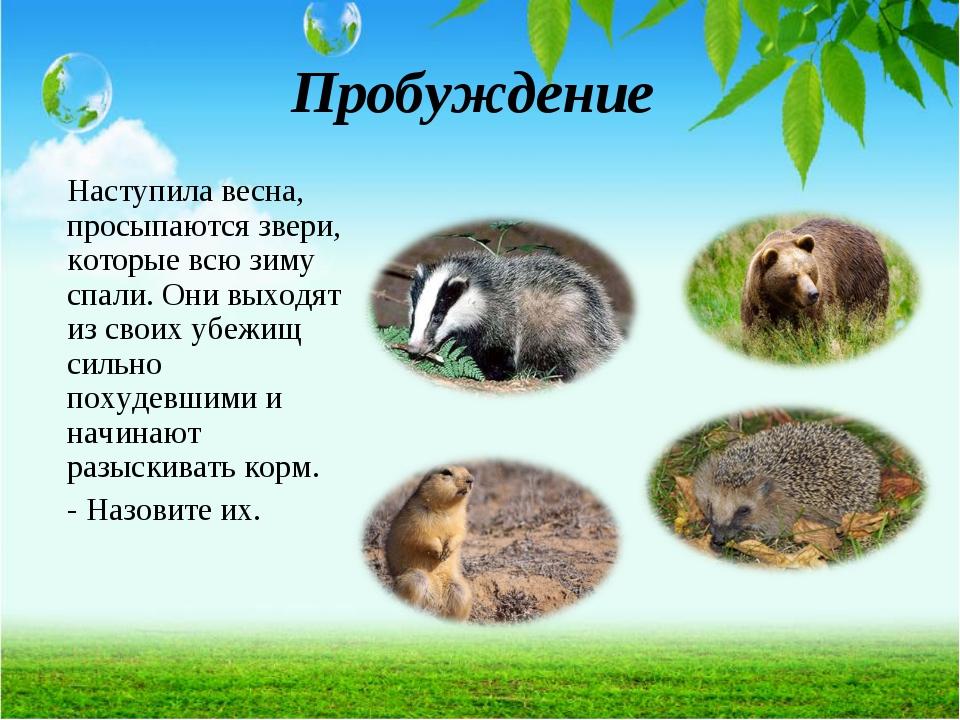 Пробуждение Наступила весна, просыпаются звери, которые всю зиму спали. Они в...