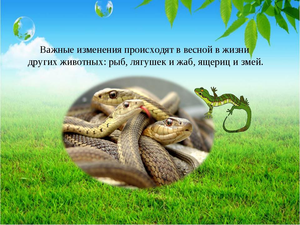Важные изменения происходят в весной в жизни других животных: рыб, лягушек и...
