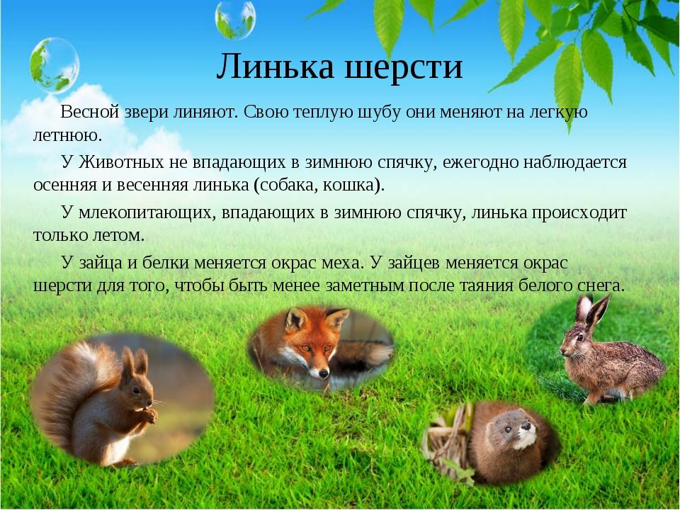 Линька шерсти Весной звери линяют. Свою теплую шубу они меняют на легкую летн...
